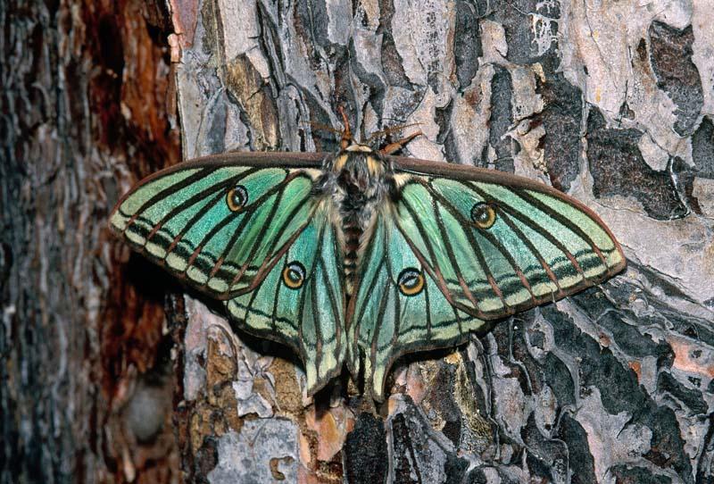 insectos (1)