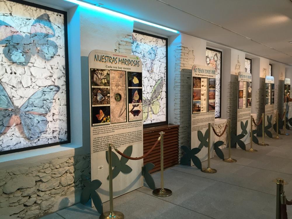 Museo de insectos, conocelos - actividades en familia-Central de Reservas Sierra de Guadarrama
