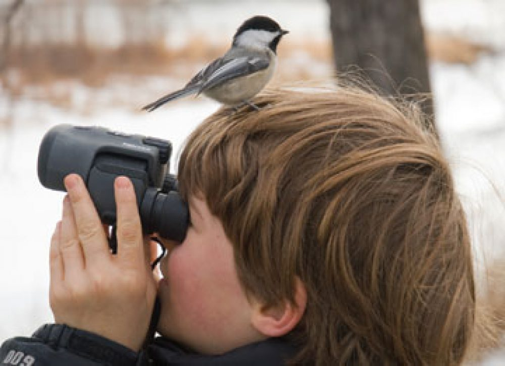 Observacion de aves en la Sierra de Madrid