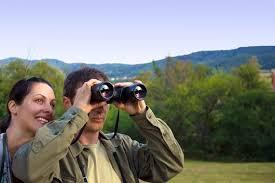 Observacion de aves en la Sierra de Guadarrama