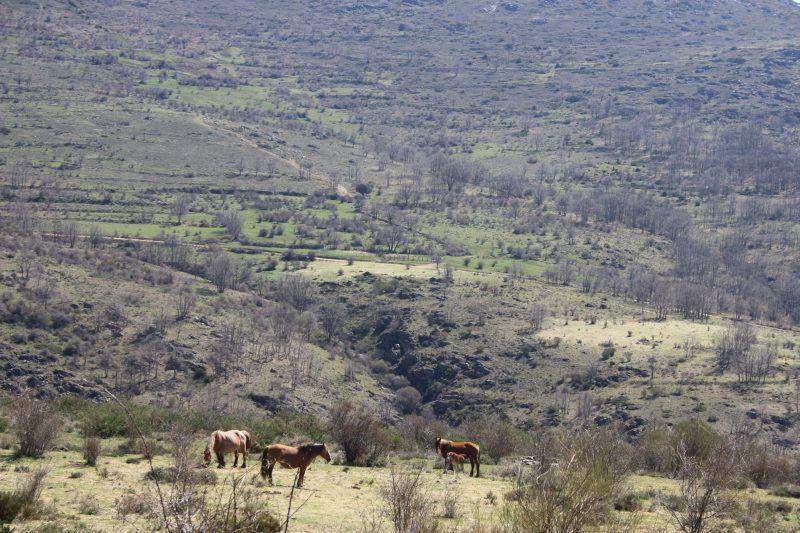Pajareando entre valles y sierras Sierra de Madrid