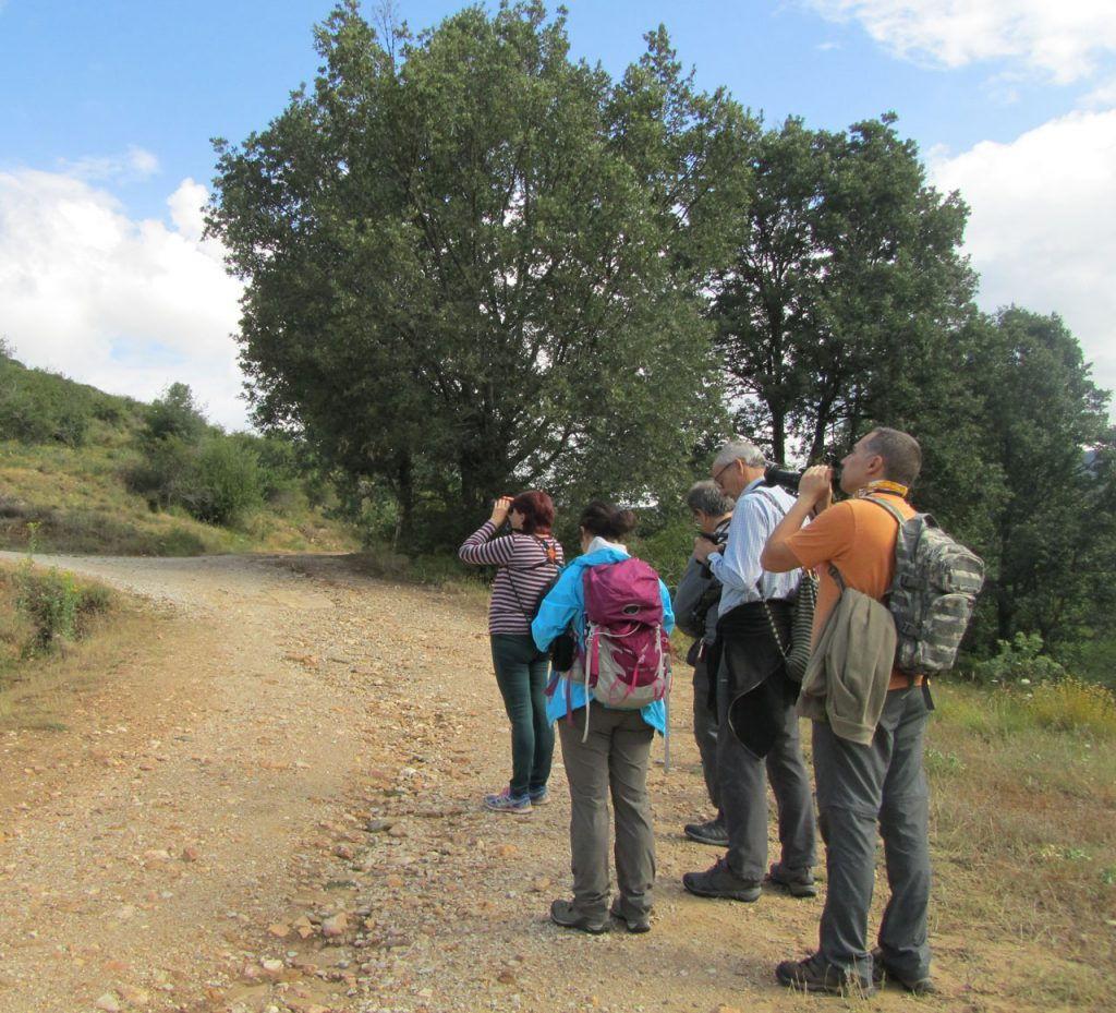 Pajareando-entre-valles-y-sierra Sierra de Madrid