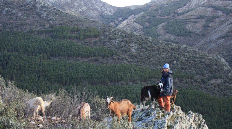 Pastoreo y paisaje como una cabra sierra madrid