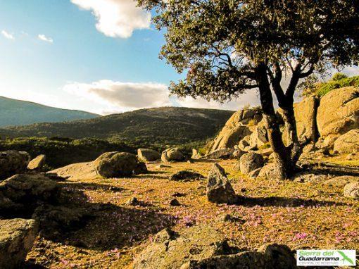 Raices de Cercedilla Ruta por Sierra de Guadarrama