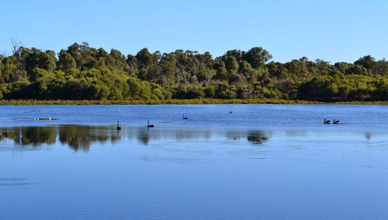 Ruta Ornitológica en la Sierra de Guadarrama Camping Monte Holiday