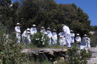 Miel en la Sierra de Madrid