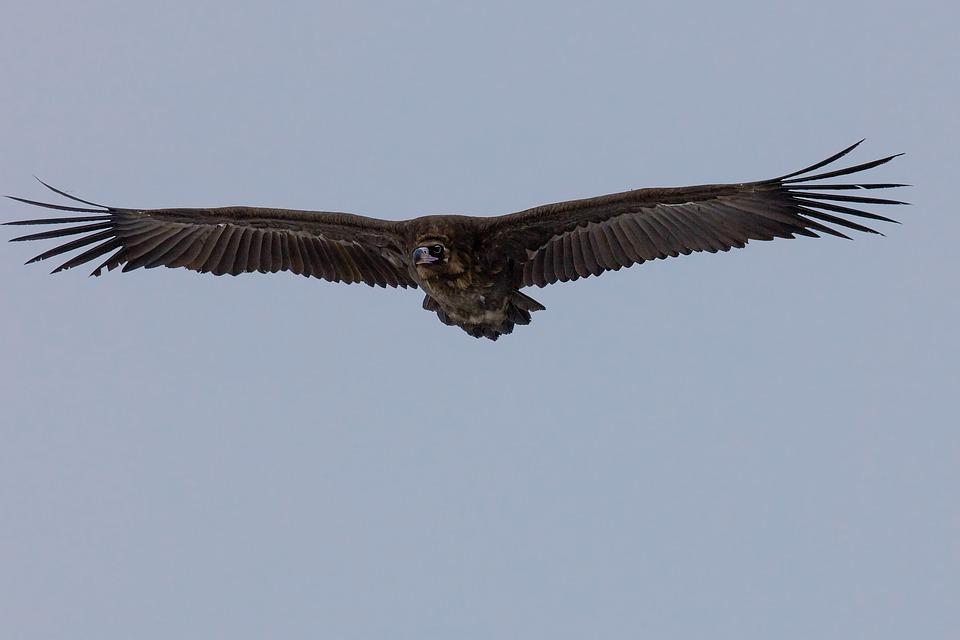Observación de Aves Rapaces en la Sierra de Madrid