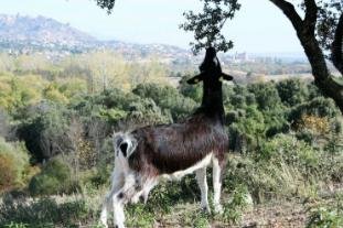 Fauna Sierra Madrid