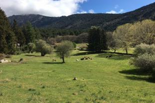 Experiencias Sierra Guadarrama