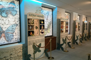 Museo del Insecto Sierra Madrid