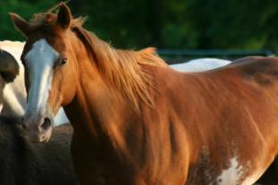 Paseos guiados caballo Madrid