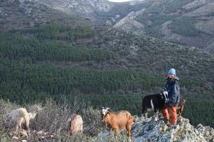 Pastoreo Sierra Madrid