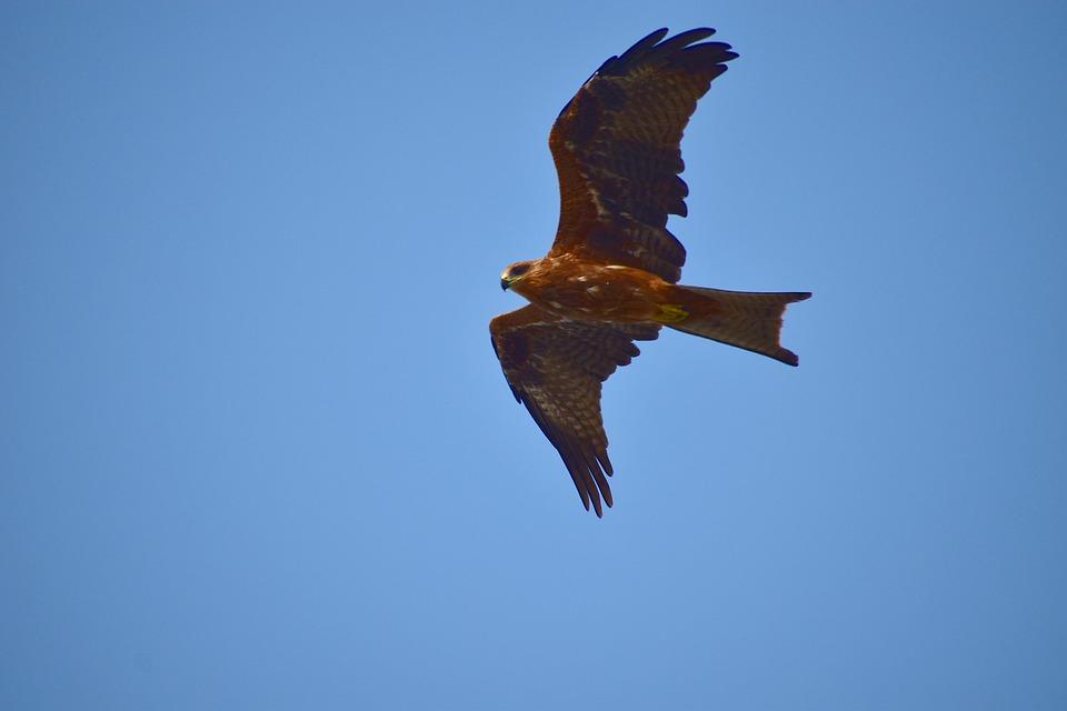 milano aves rapaces sierra Madrid