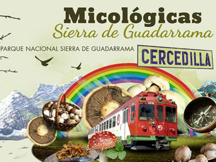 Jornadas Micologicas Cercedilla Sierra Guadarrama