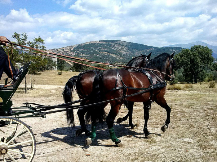 Paseo en coche de caballos en la Sierra de Guadarrama