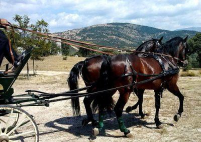 Paseo en coche de caballos y gastronomia en collado mediano