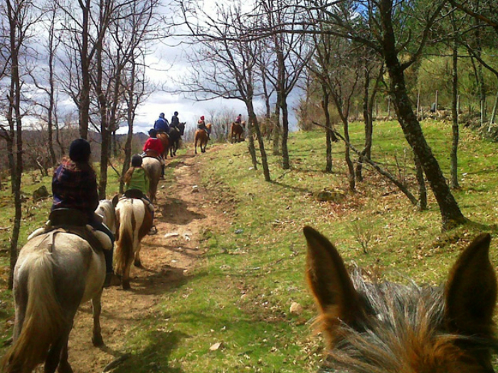 Paseos a caballo en Cercedilla Sierra Madrid