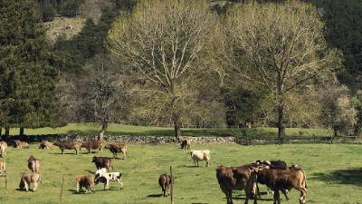 Granja Biodinamica Sierra de Madrid