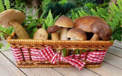 Llega octubre y con él, las deliciosas Jornadas Micológicas