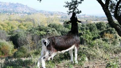 Animales Sierra Guadarrama