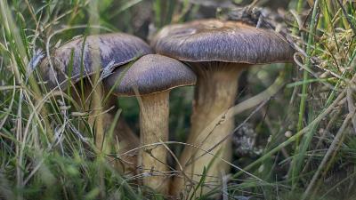Jornadas Micológicas Becerril de la Sierra