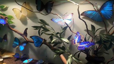Museo del Insecto Sierra de Guadarrama