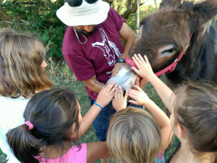 Rutas con burro en la Sierra de Guadarrama