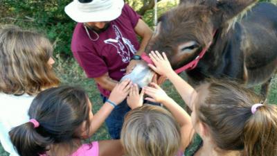 rutas con burros en la Sierra