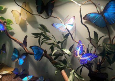 museo del Insecto el escorial