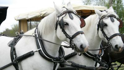 paseo en coche de caballos y gastronomia Sierra de Madrid