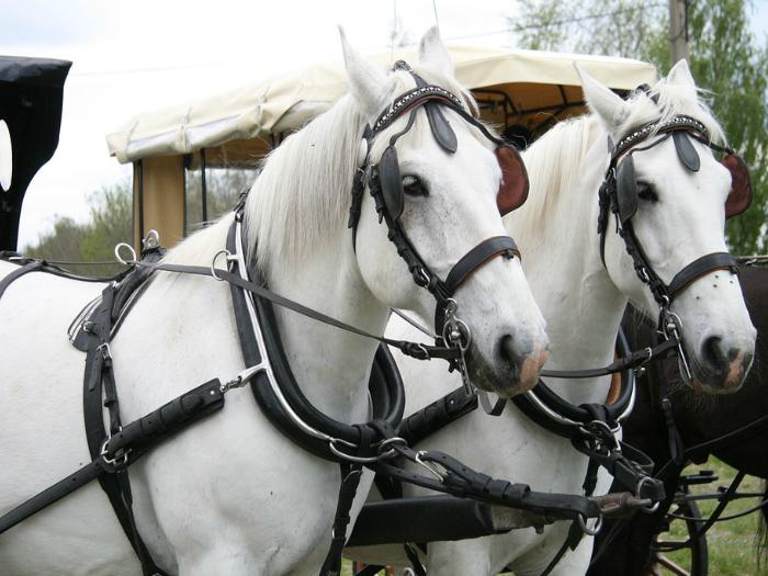 Paseo en coche de caballos y gastronomia Sierra Madrid