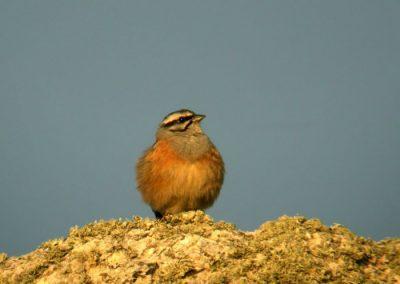 ver aves en madrid