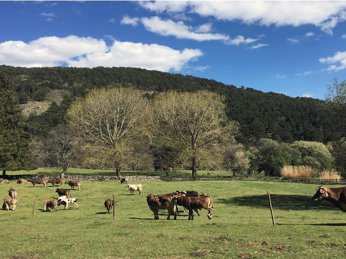 Granja Castilla Verde Sierra Madrid