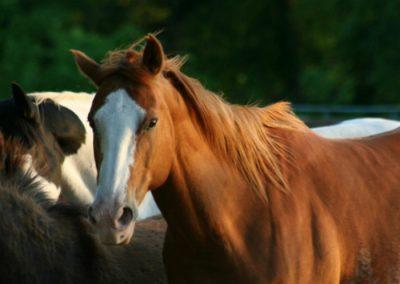 caballos sierra madrid