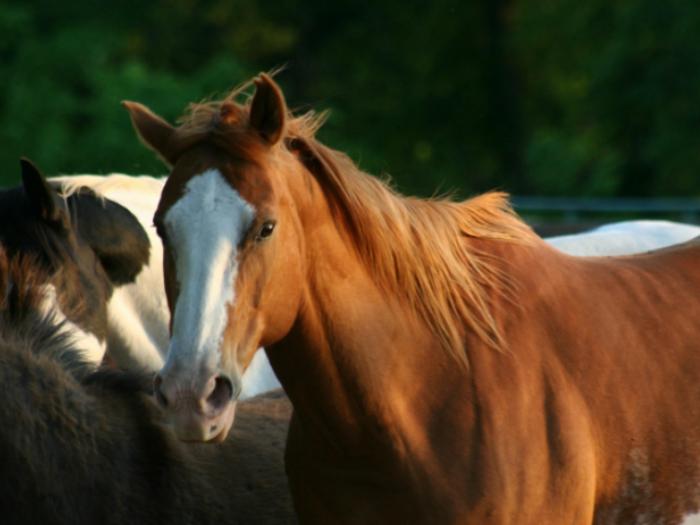 caballos sierra guadarrama