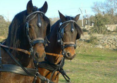 coche de caballos sierra guadarrama