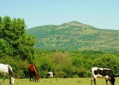 montar a caballo en lmadrid