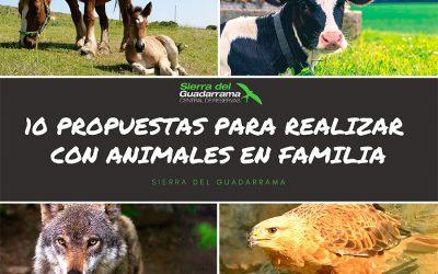 10 Propuestas para realizar con animales en familia
