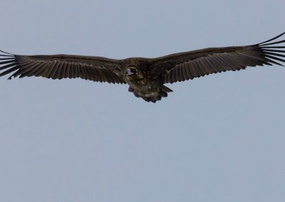 Aves-rapaces-madrid