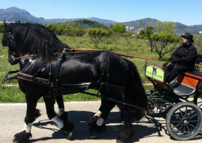 montar en coche de caballos