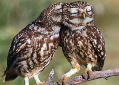 ver aves rapaces en madrid