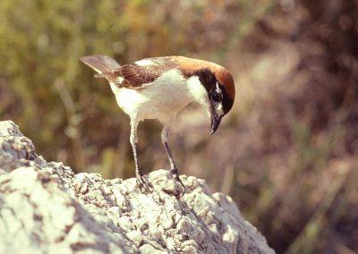 aves en la sierra