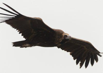 ver aves rapaces en la Sierra