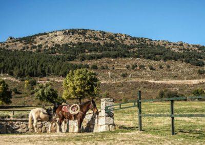 montar a caballo los molinos