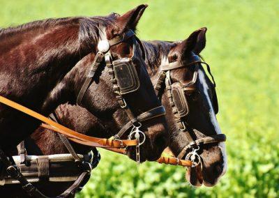 coche caballos en la sierra