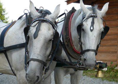 coches de caballos en la sierra