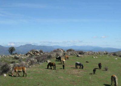 caballos y leche de yegua en madrid