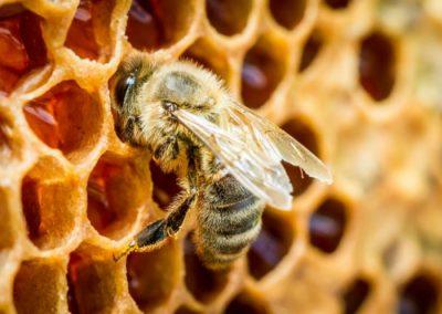 miel en la sierra