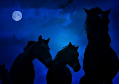 noche con caballos en Los Molinos