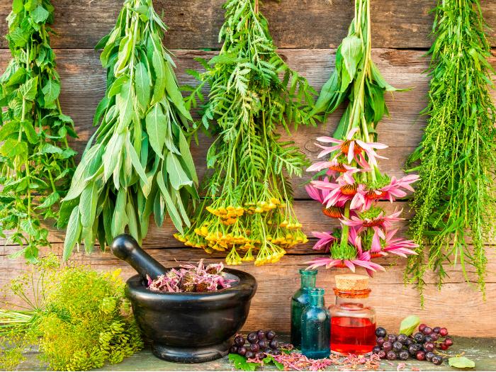 Curso Práctico de Plantas Medicinales en la Sierra de Madrid